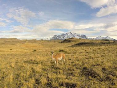 Torres del Paine 5